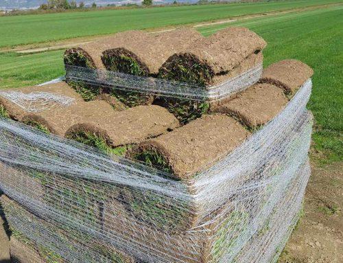 Тревни чимове или затревяване с тревно семе