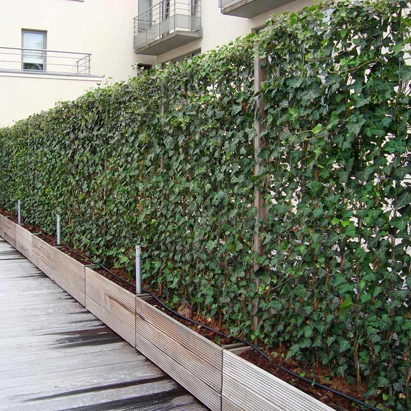 зелена фасада