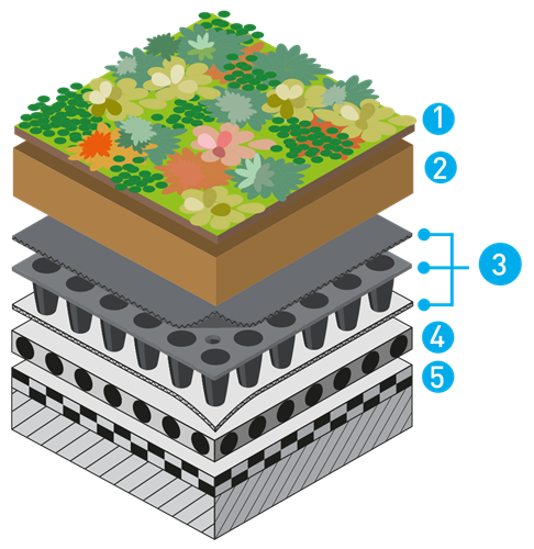 зелен покрив - екстензивен