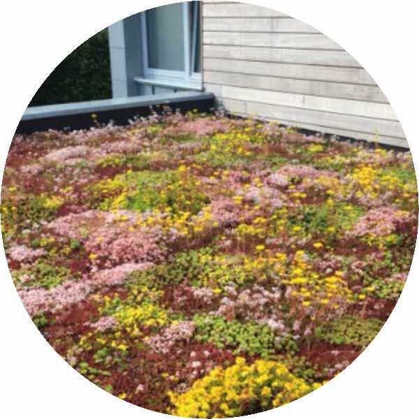 екстензивни покривни градини