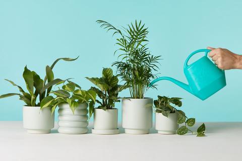 поливане на интериорни растения