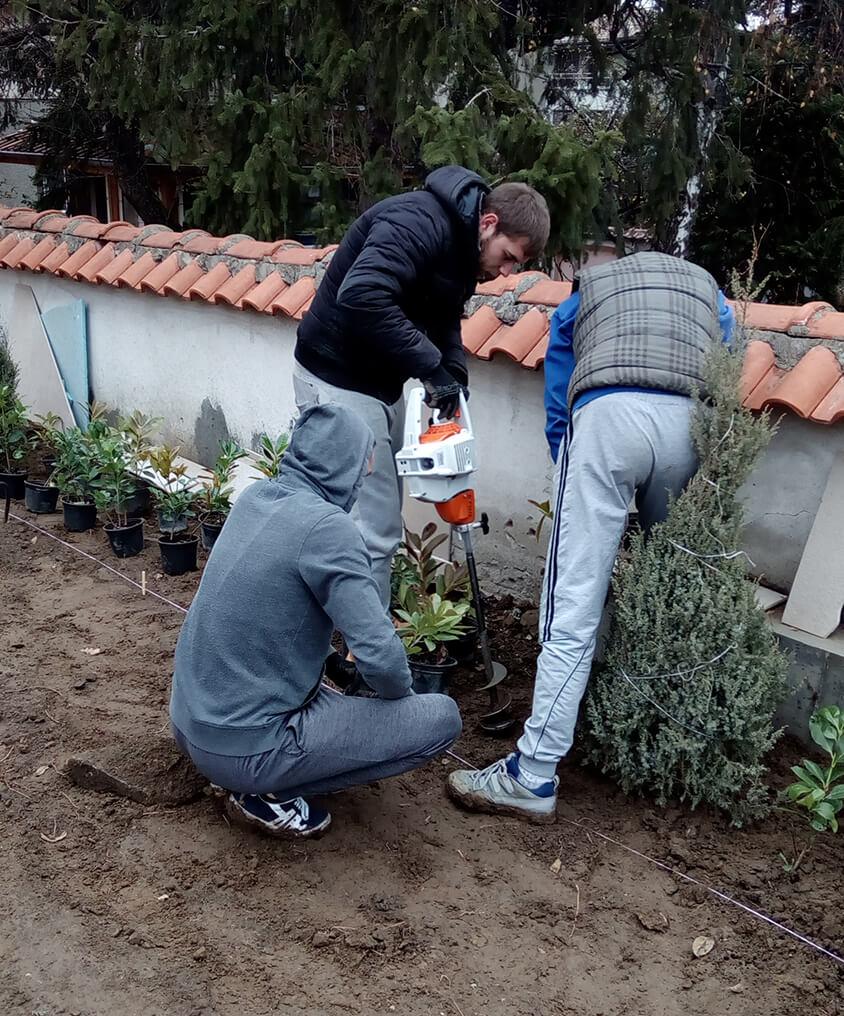 засаждане на дървета и храсти