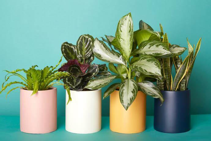 торене на интериорни растения