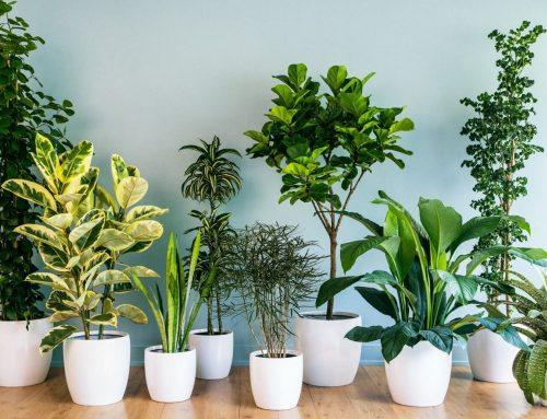 Грижа за интериорните растения
